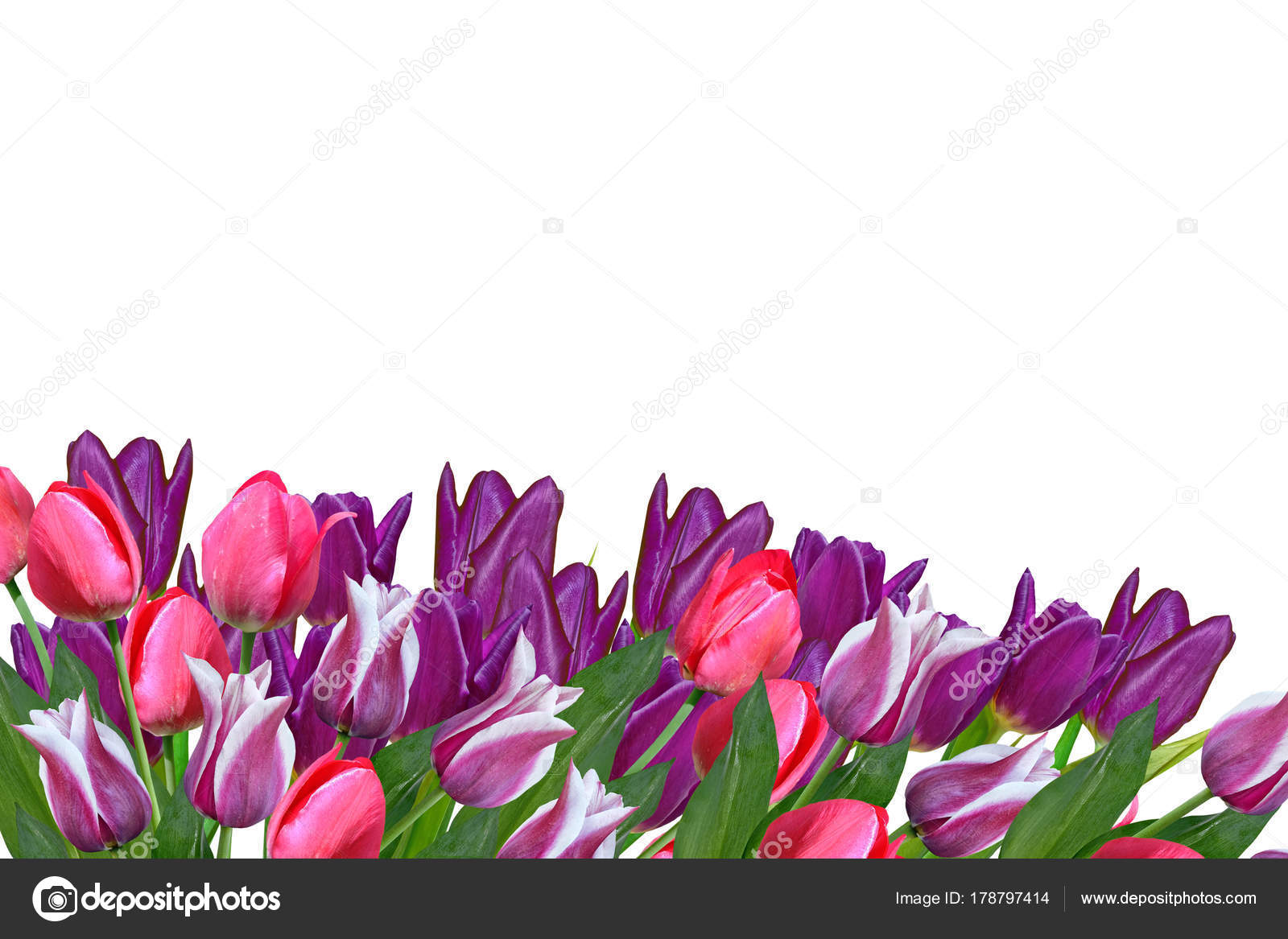 Spring flowers tulips isolated on white background stock photo spring flowers tulips isolated on white background stock photo mightylinksfo Image collections