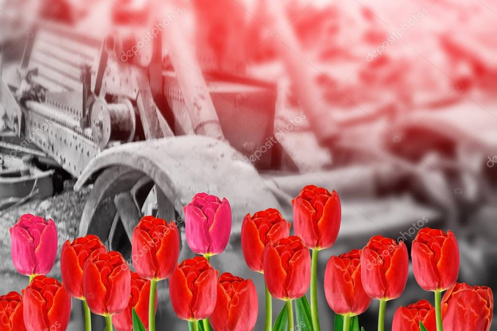 Background to the Victory Day holiday