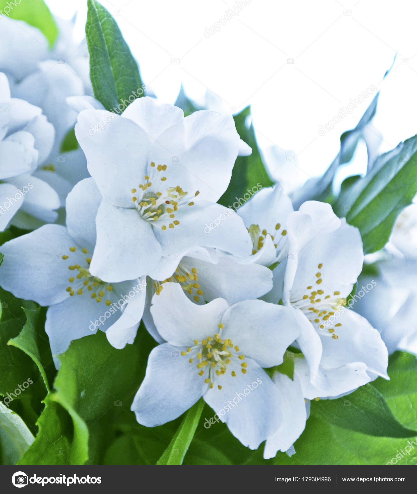 Картинка посадка цветов