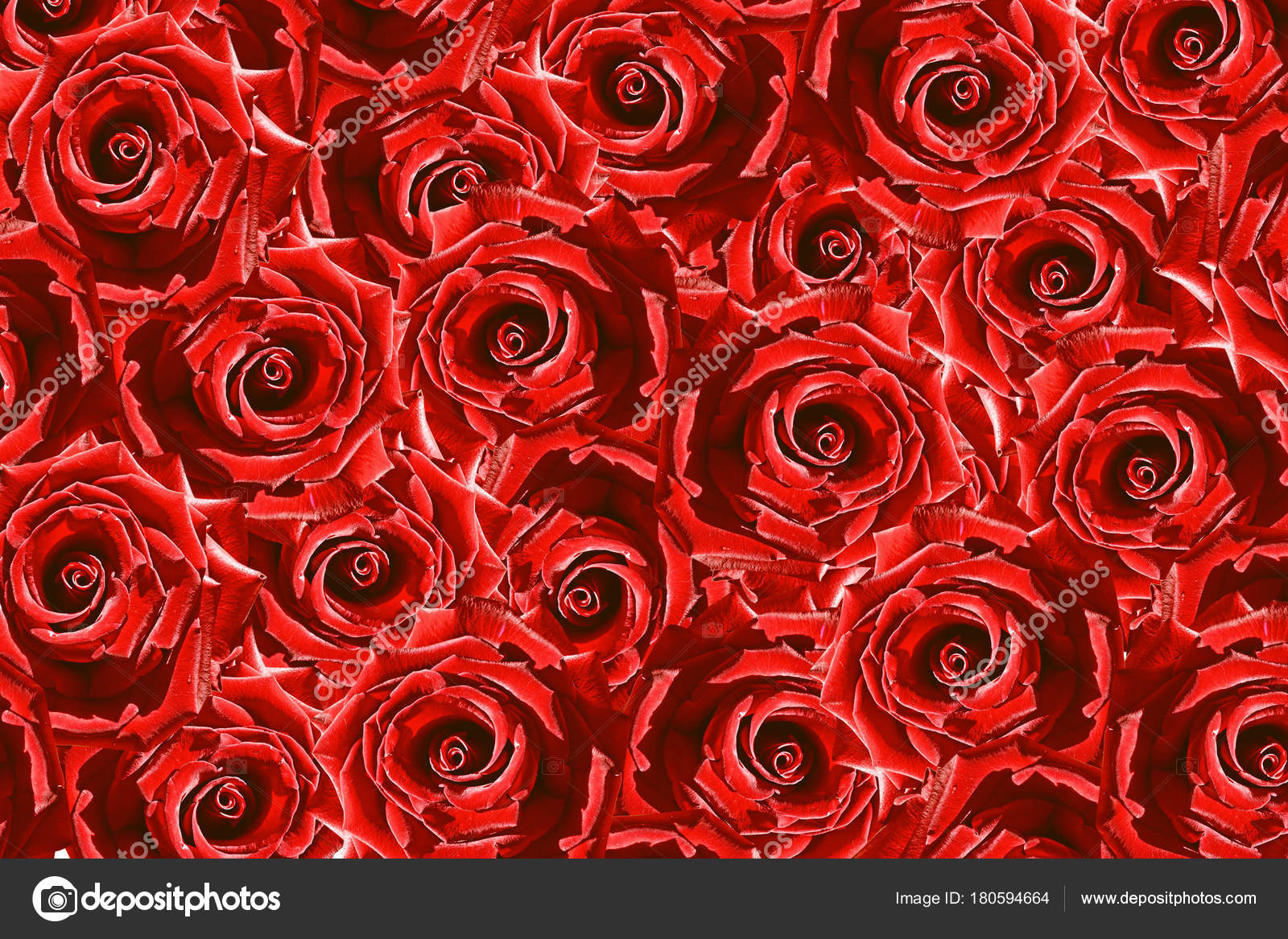 Fondo Natural De Pimpollos De Rosas Rojas Flores Fotos De Stock