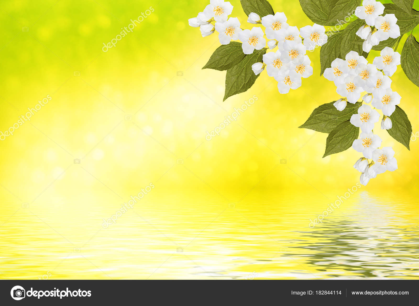 Spring landscape with delicate jasmine flowers stock photo spring landscape with delicate jasmine flowers stock photo izmirmasajfo