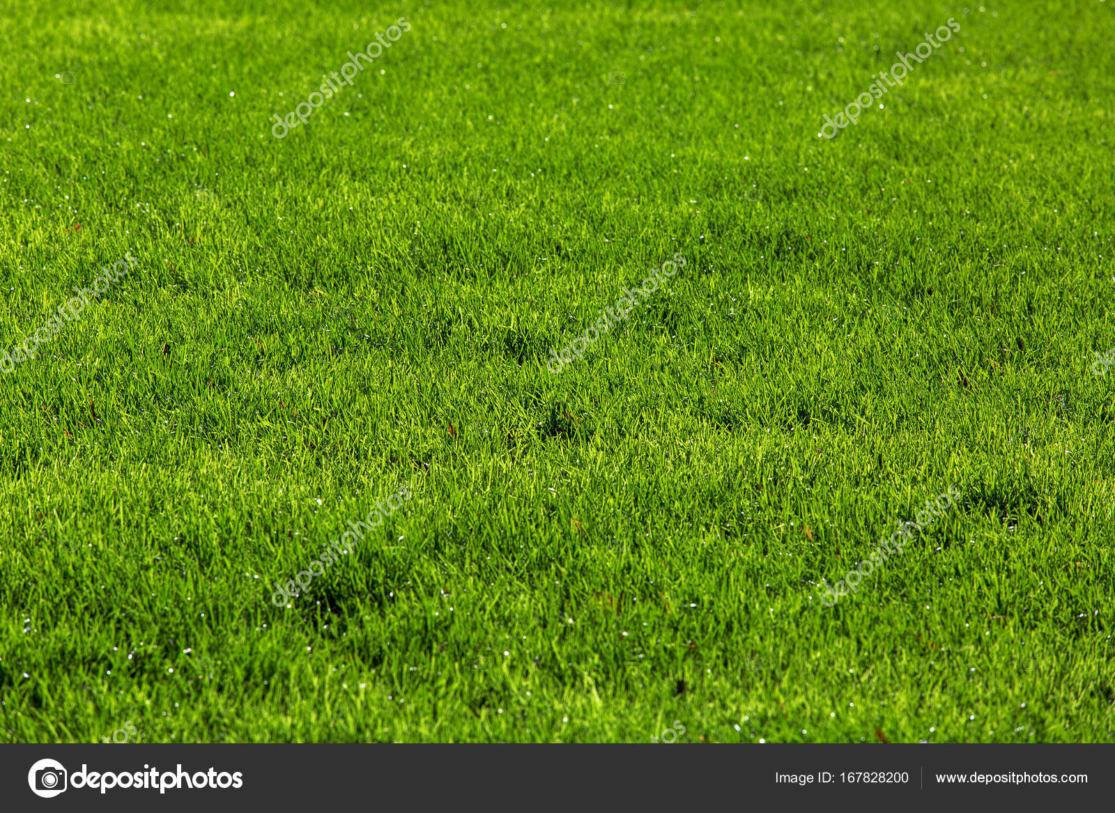 Lo Sfondo Verde Erba Foto Stock Bespaliya 167828200