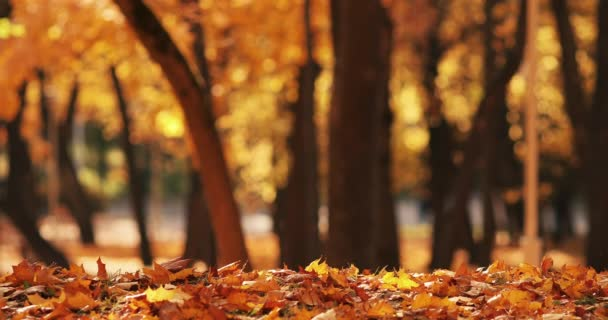Close up yellow foliage at autumn forest surrounded by sunlight 4k footage