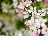 Květy Bledě růžové květy s pozadím bokeh
