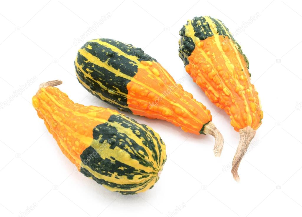 Three pear-shaped orange ornamental gourds with bold green bases
