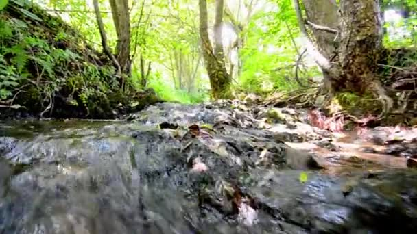 Creek in rainforest running over mossy rocks, low angle