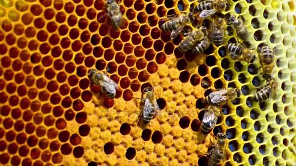 Bienen produzieren Honig