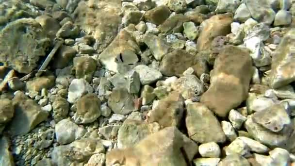 Underwater diver tracking fish among sea reef rocks