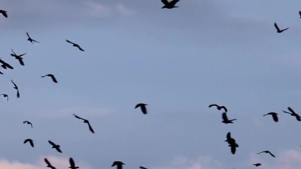 Pohled na letící hejno ptáků na zatažené obloze modré pozadí