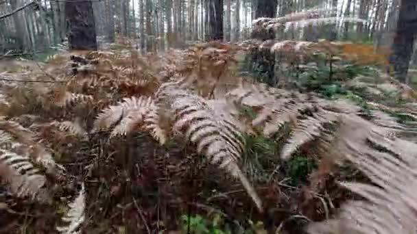 Camminando tra felci pov nella foresta