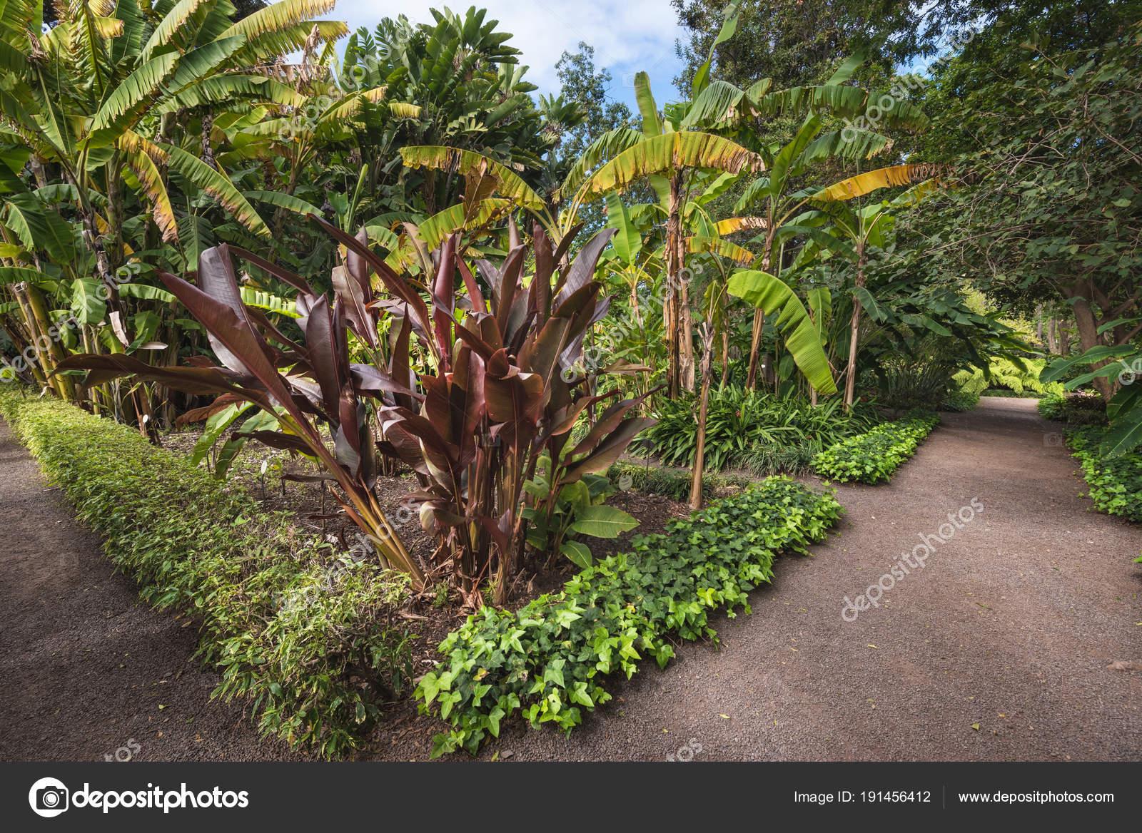 Botanische tuin in puerto de la cruz tenerife canarische for Botanische tuin tenerife