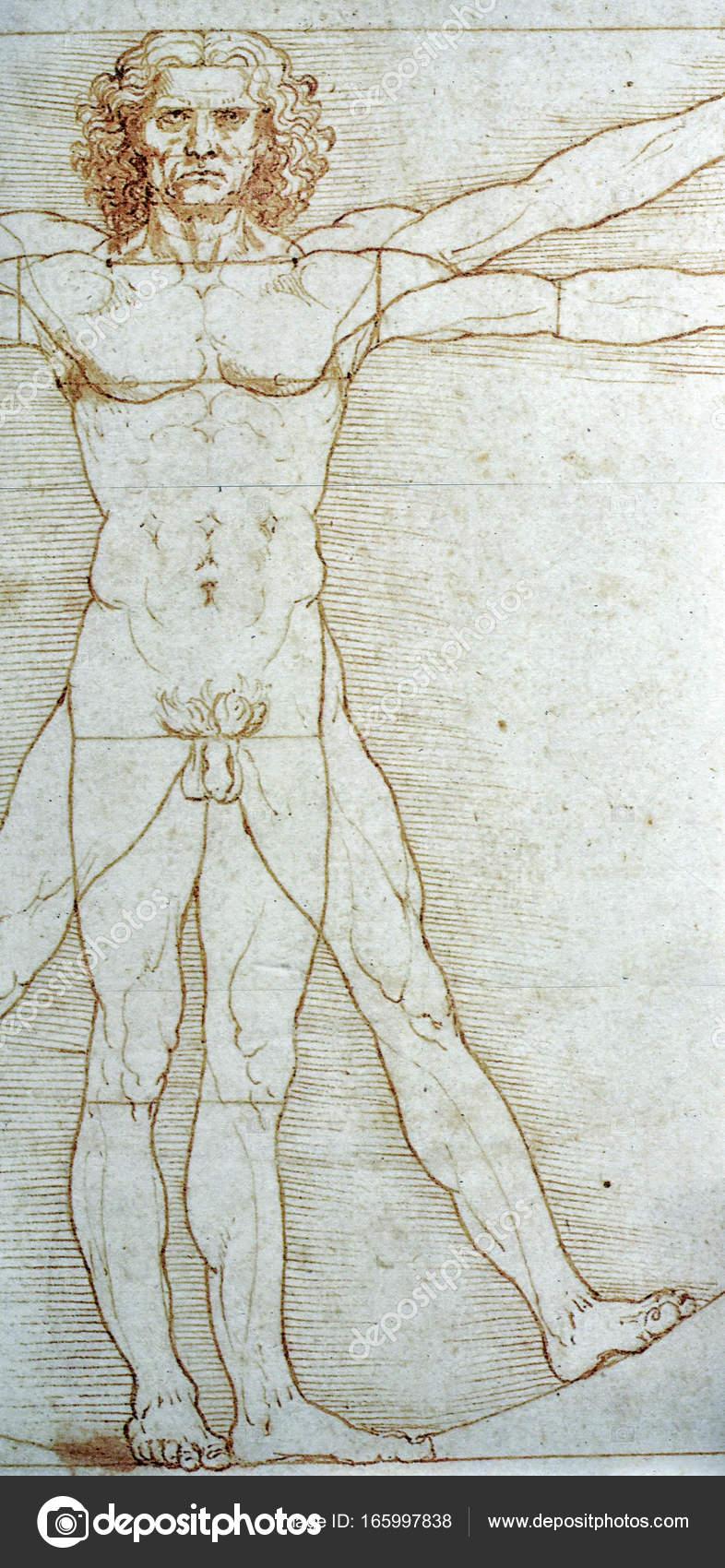 Leonardo da Vincis Zeichnung der menschlichen Anatomie ...