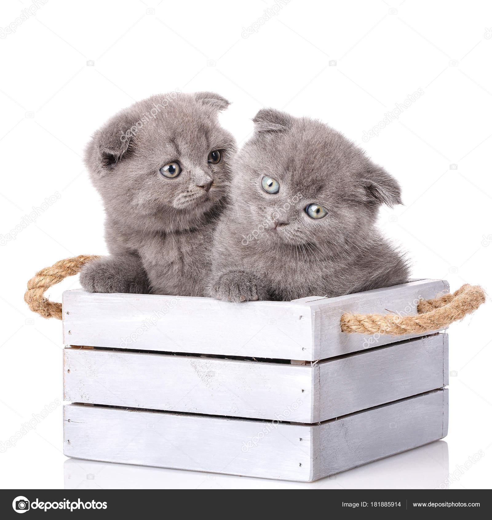 černá a bílá dospívající kočička bbw lesbický obrázek