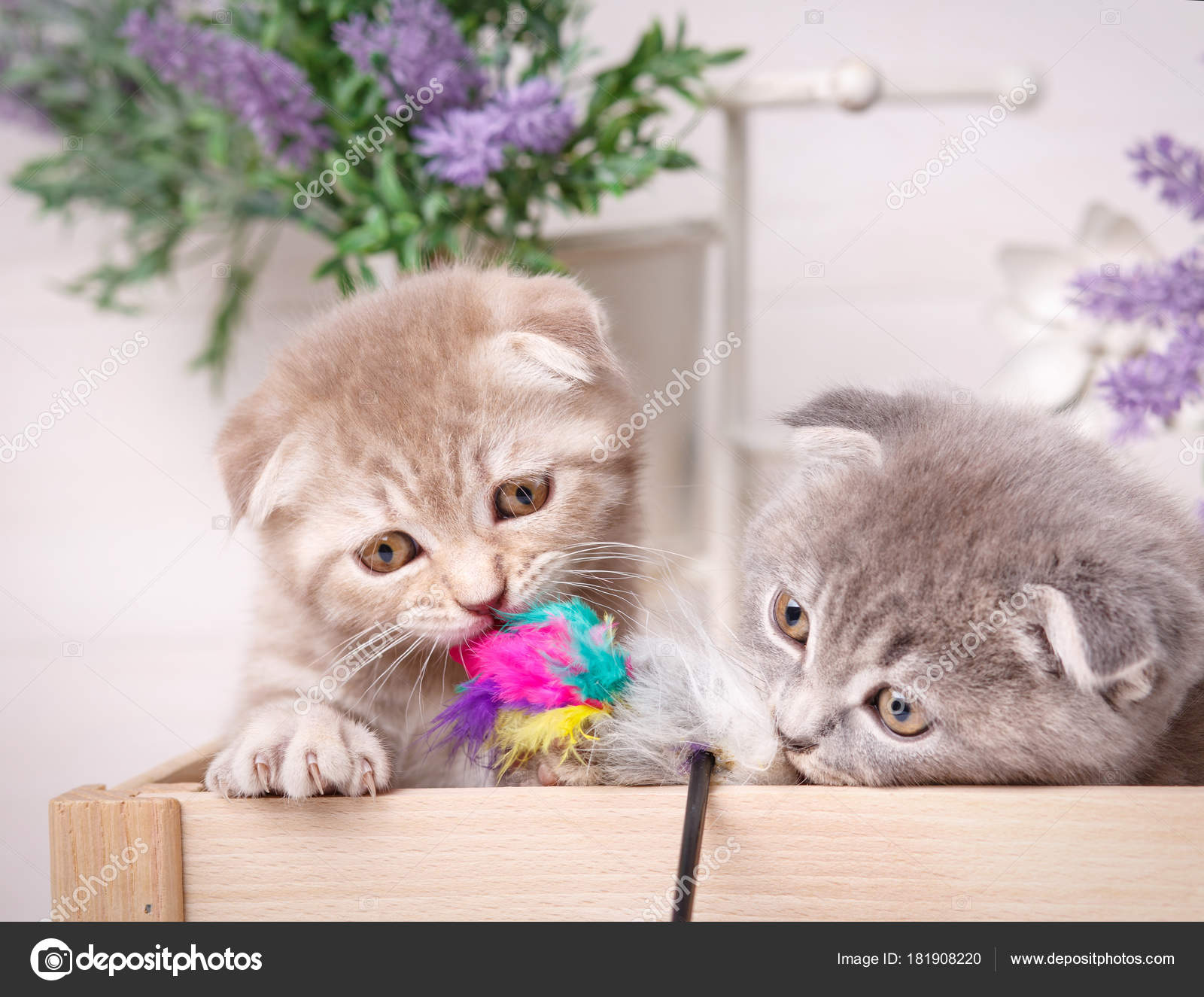 фото котят двух