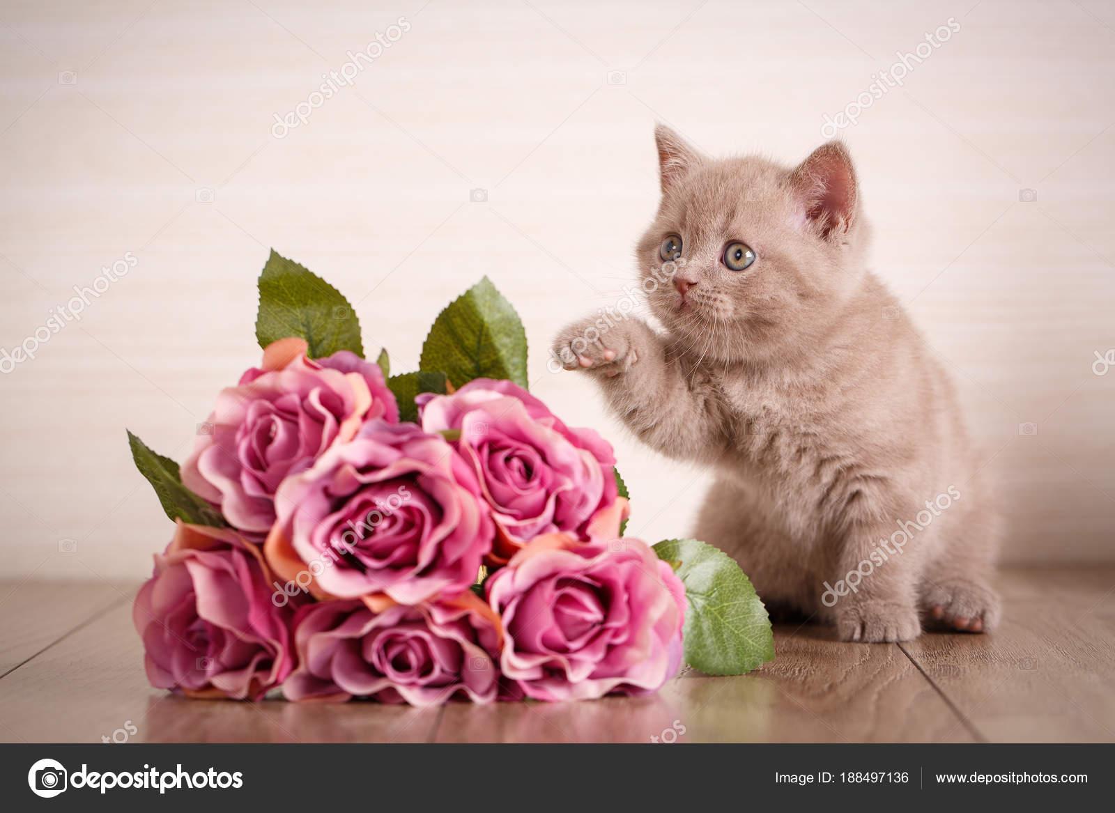 Cat sits near a bouquet of roses — Stock Photo © serkucher #188497136