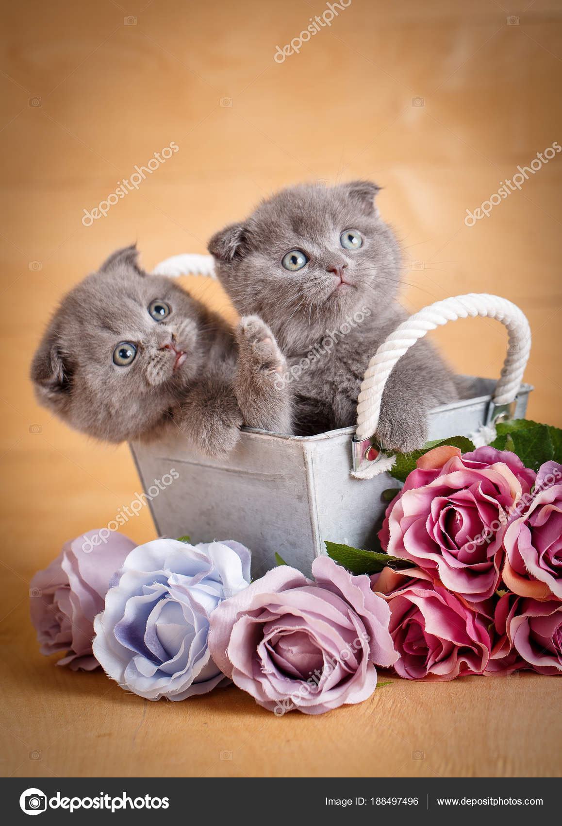 Kittens, Scottish Cat. A couple of cats near flowers. — Stock Photo ...