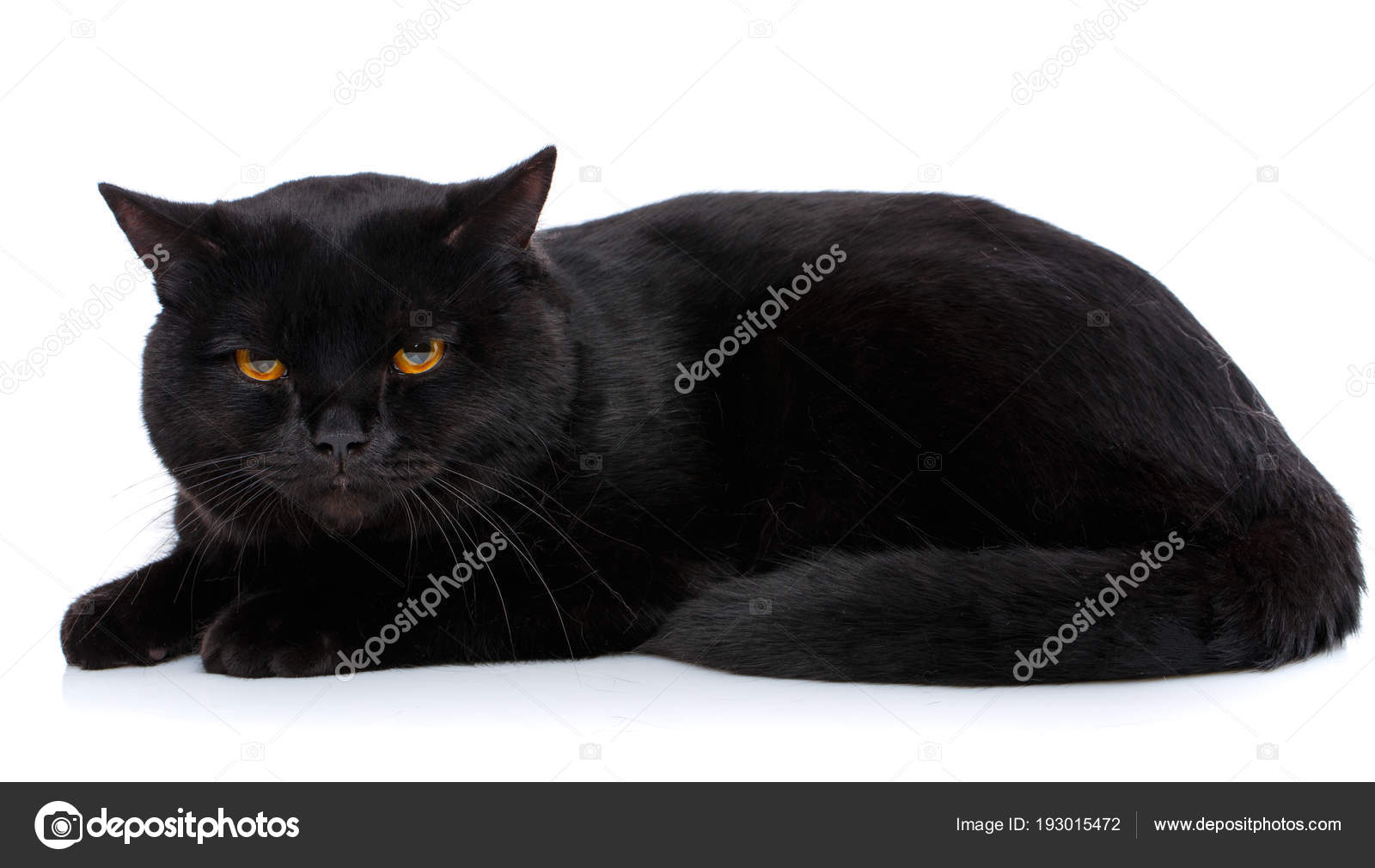 Hermoso gato negro para colorear en blanco — Fotos de Stock ...