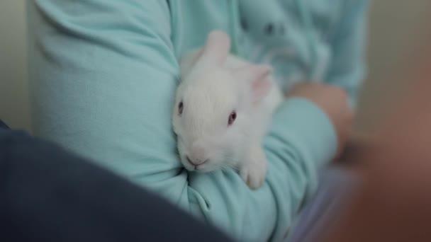 Niedliches weißes Kaninchen sitzt auf den Armen der Mädchen und zuckt amüsiert mit den nasengepressten Ohren. Nahaufnahme. Verschwommener Vordergrund