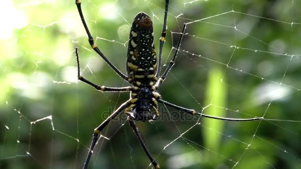 Detailní záběr pavouk na webu v tropickém pralese