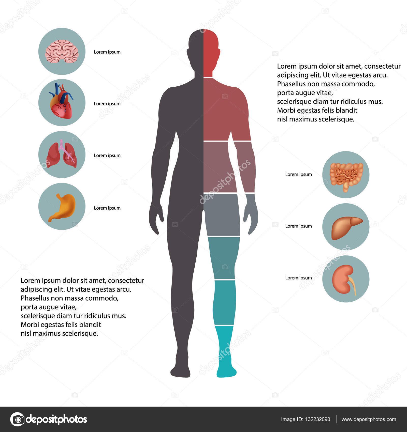Cuerpo humano con los iconos de los órganos — Archivo Imágenes ...