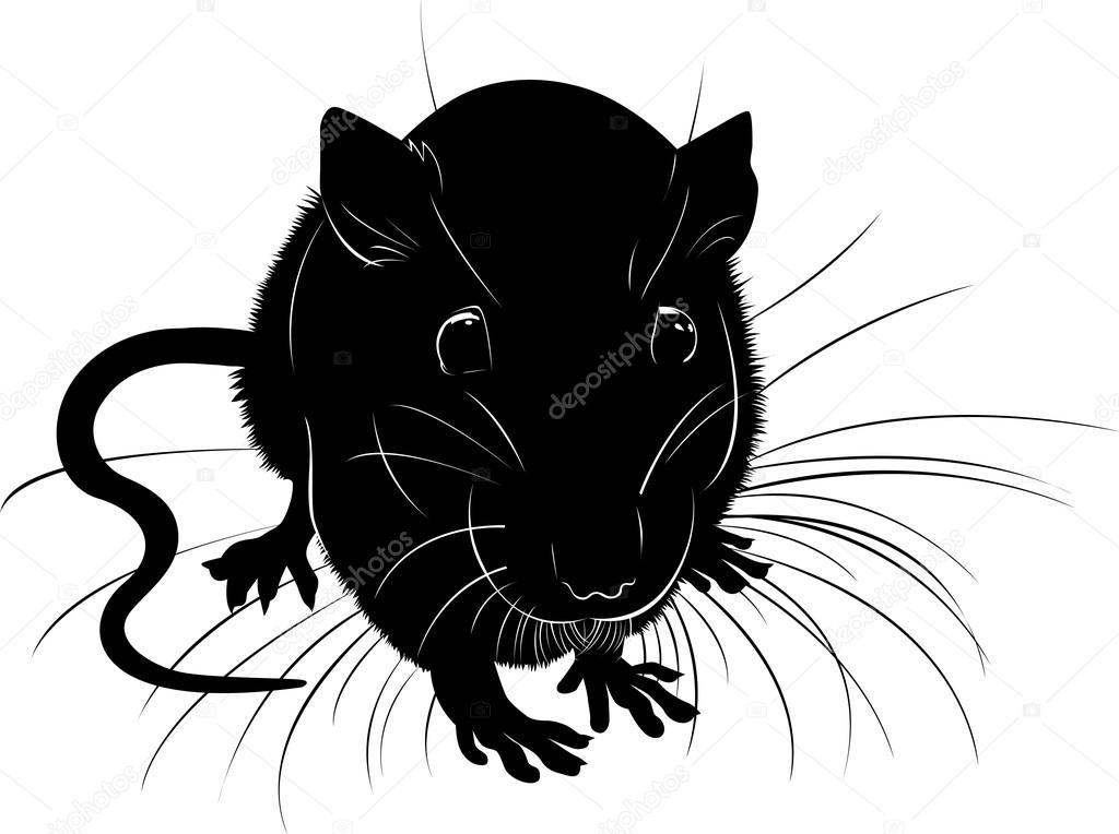 Ratas. Las Ratas Negras Animal Vector Silueta Sobre Un