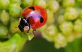 Krásné barevné včely létat hmyz na květině makro detailní fotografie detaily malá chyba v zahradě okvětní lístek květinové pozadí detailní oko křídlo tělo hmyzu