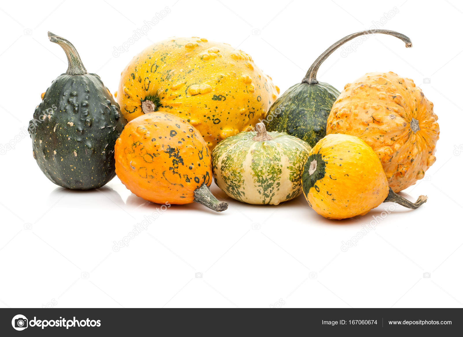 set of small pumpkins isolated on white background stock photo