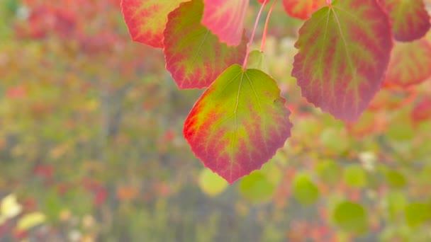 Podzimní listí. Na podzim. Detail listů. Žluté a červené listy a sluneční světlo. Podzimní slunce. Podzimní pozadí.