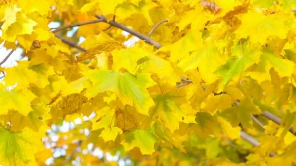 Podzimní listí. Na podzim. Detail listů. Žluté listy a sluneční světlo. Podzimní slunce. Podzimní obloha. Sky a žluté listy. Podzimní pozadí.