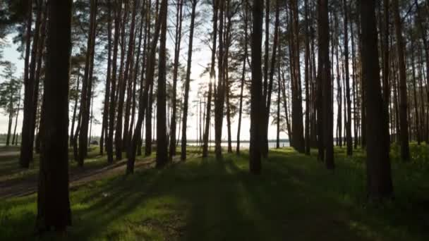 Západ slunce v lese. Čas kola krajina