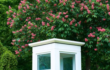 Little white guard booth in green spring park with pink sweet chestnuts. The room for work.