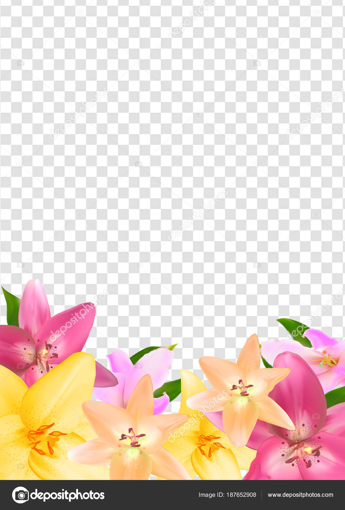 Summer Natural Floral Frame on Transparent Background Vector