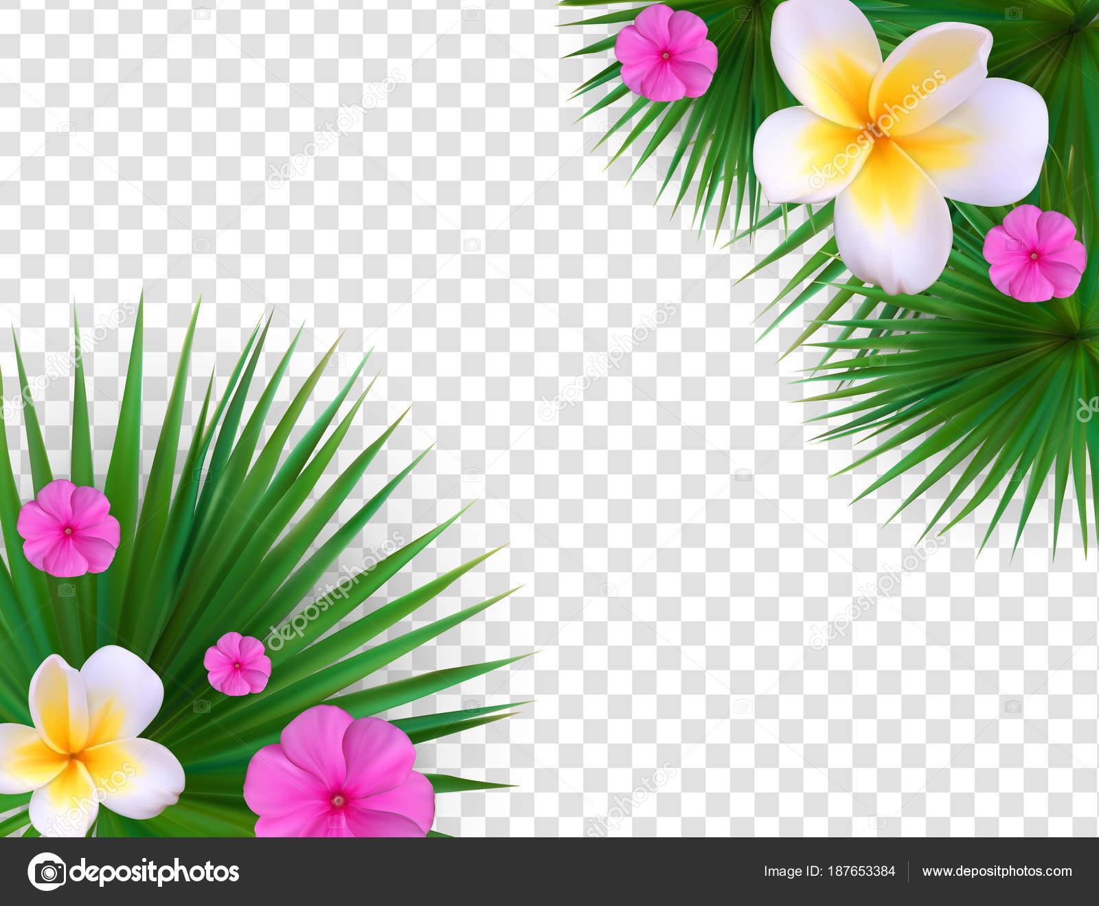 Flores Vectoriales Con Fondo Transparente: Marco Floral Verano Natural En La Ilustración De Vector