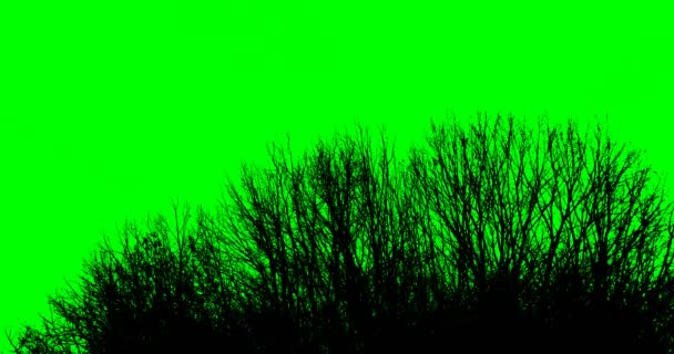 Silhouette of tree branches on a green background