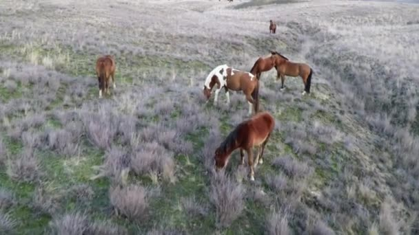 The camera flies around the horses herd