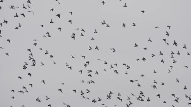 Hejno ptáků, holubice hemží proti modré obloze mraky