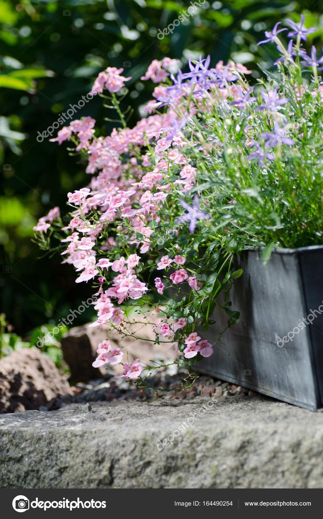 Ogrod Piekne Kwiaty W Doniczkach Zdjecie Stockowe C Eugena