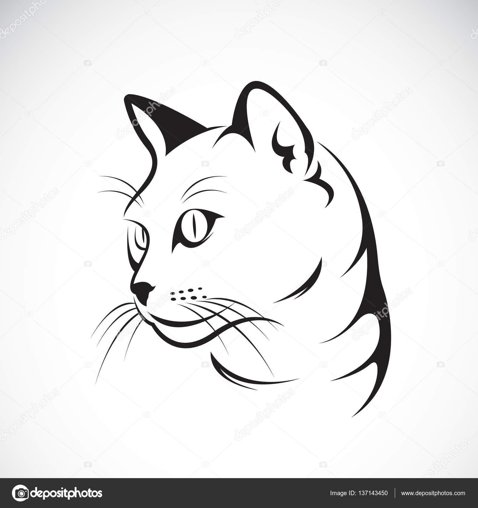 vetor de um desenho de rosto de gato no fundo branco vetor illustra