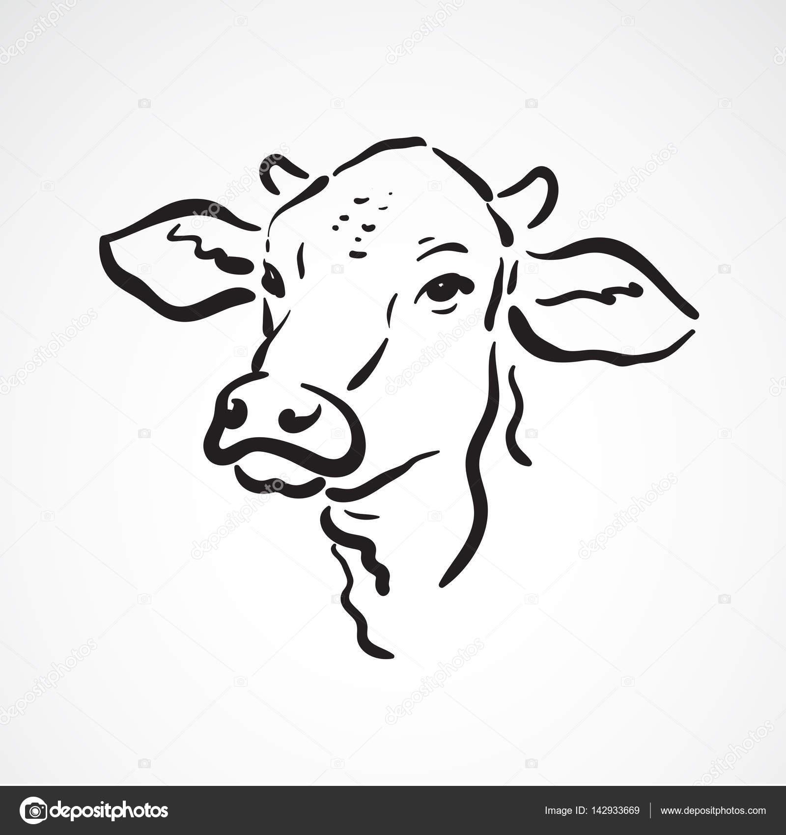 Vector Cabeza De Vaca Para Colorear Vector De Una Cabeza De Vaca