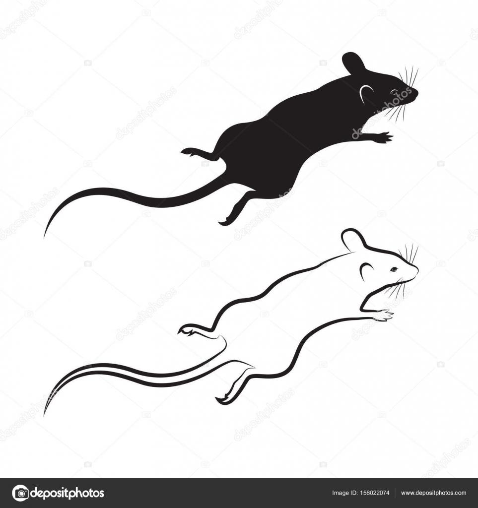 Vecteur d un dessin de rat sur fond blanc animal - Dessin d un rat ...