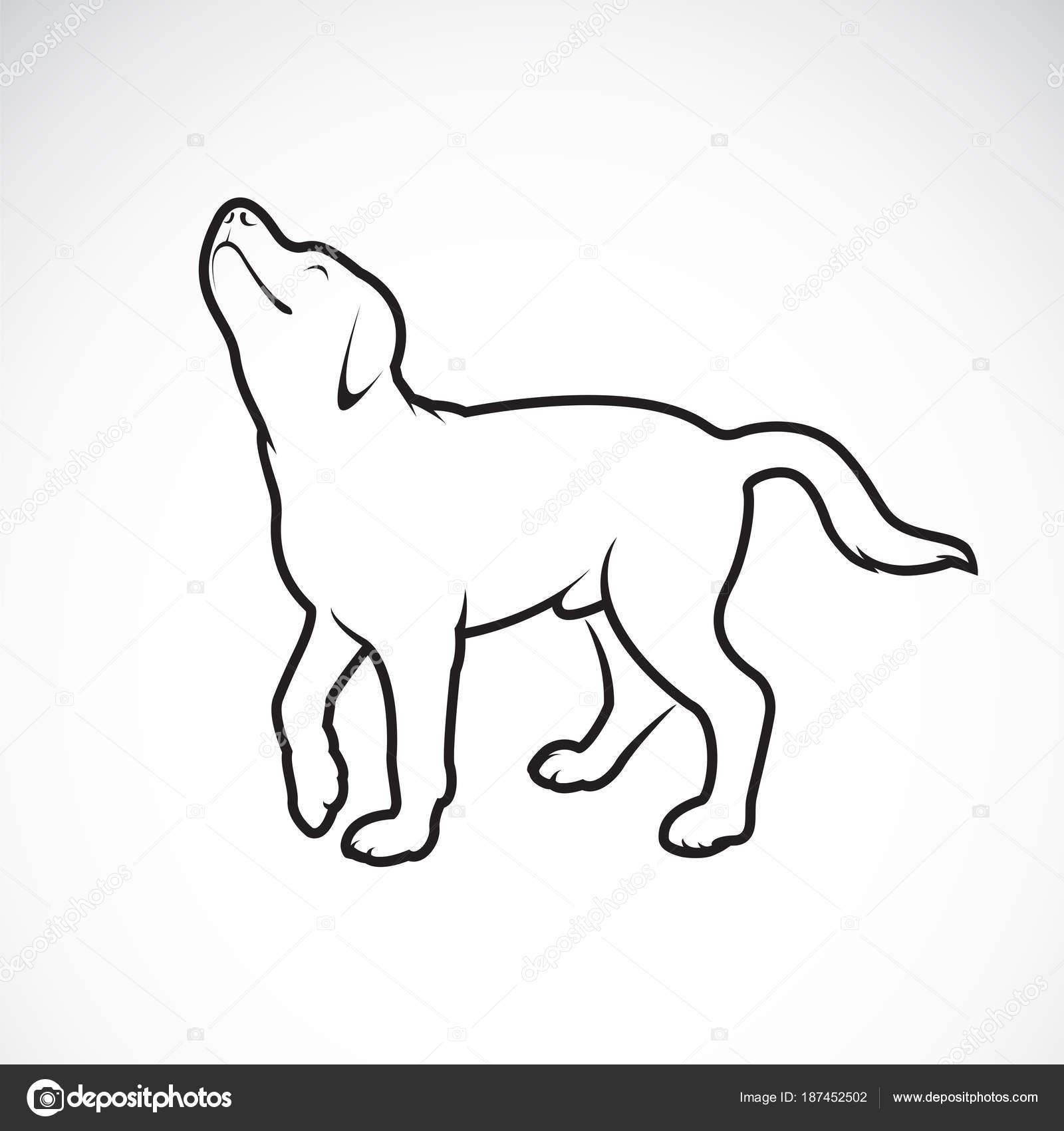 Dibujos Palomas Blancas Faciles Vector De Un Labrador De Perro