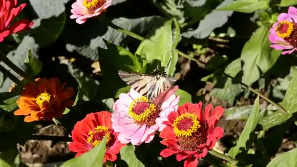 Pillangó a virágzó virágok