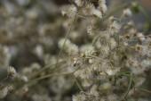 ročník krásného sušených květin