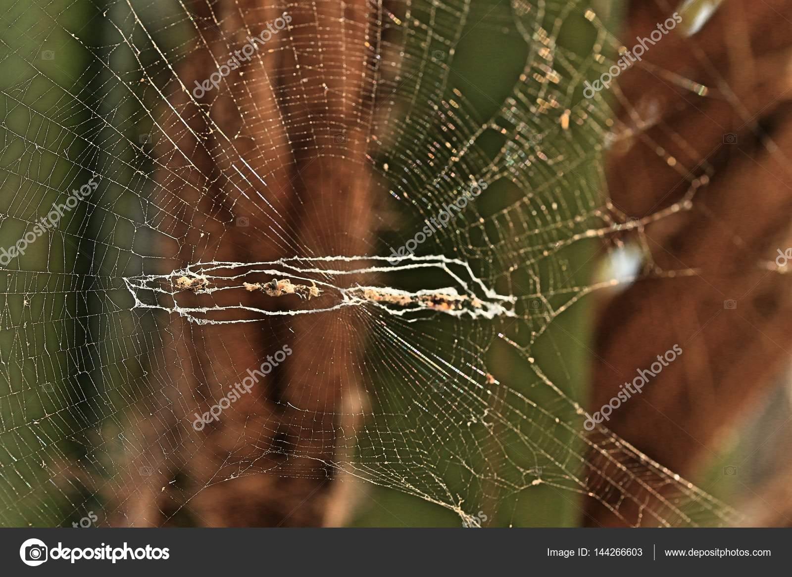 Фото девушка в паутине, Фото: Девушка, которая застряла в паутине Кадр из 24 фотография