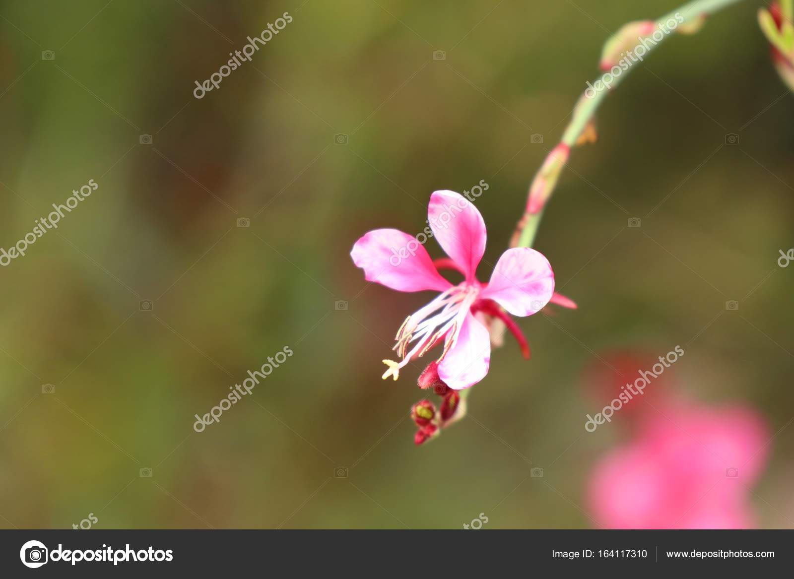 Pink flowers in nature stock photo oilslo 164117310 pink flowers in nature stock photo mightylinksfo
