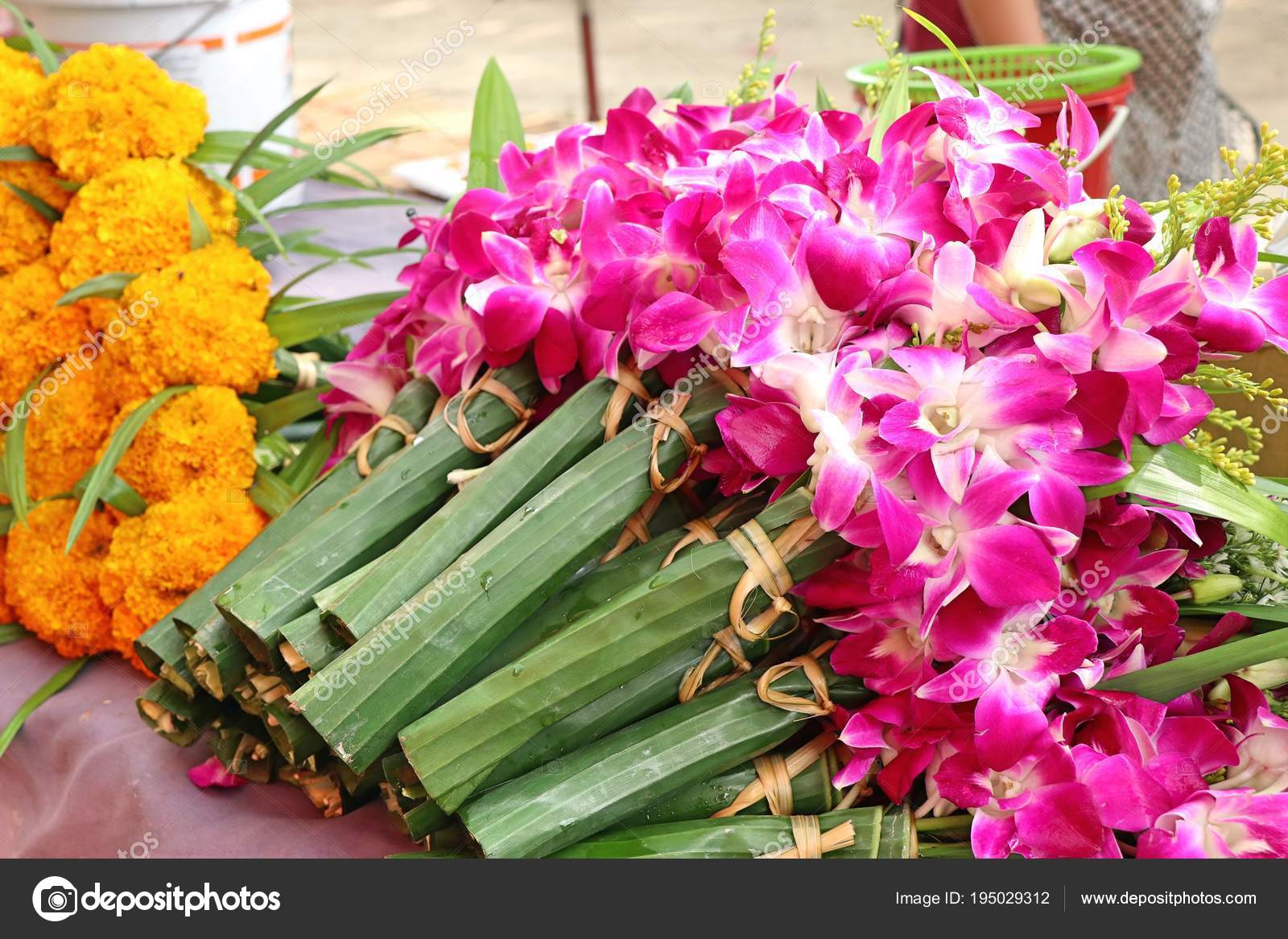 Mor Orkide çiçek Market Stok Foto Oilslo 195029312