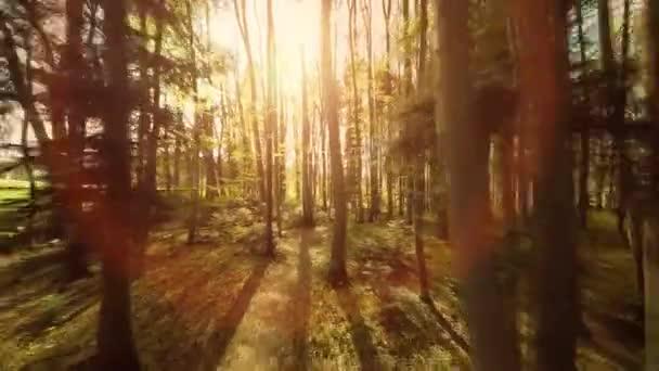 schöner grüner Sommerwald