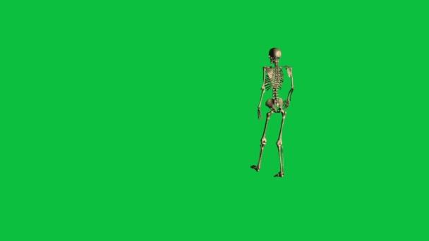 3D Animation des Gehens Skelett - trennen auf green-screen ...