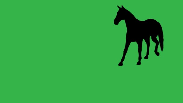 Horse moving. On green screen