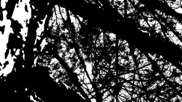 Tmavá silueta stromu - Černá a bílá Pan v kresleném stylu
